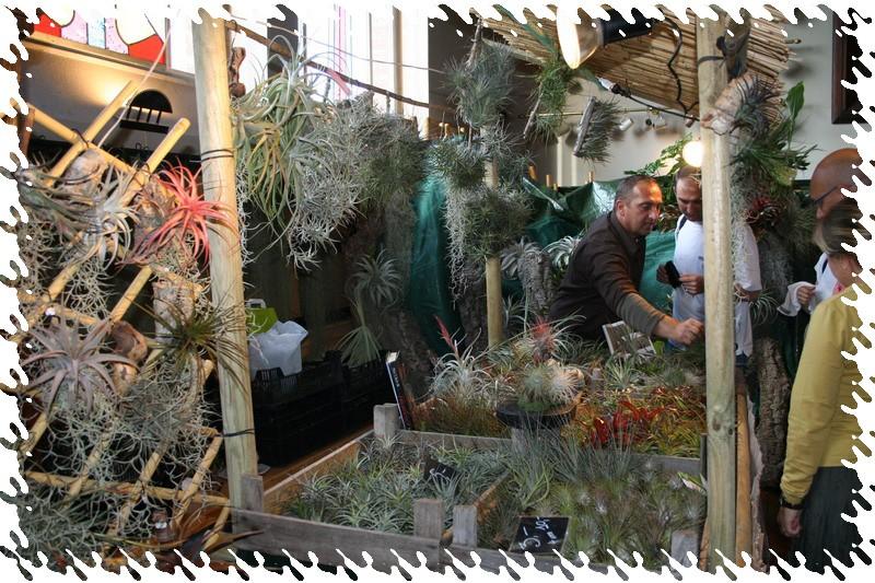 2ème salon international d'orchidées à Oudenaarde 410