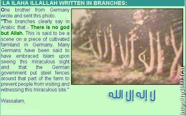 ايات ومعجزات من خلق بديع السموات Ayat0110
