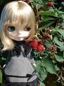 Black Berry Bush  (BBB) // SBL Dsc03012
