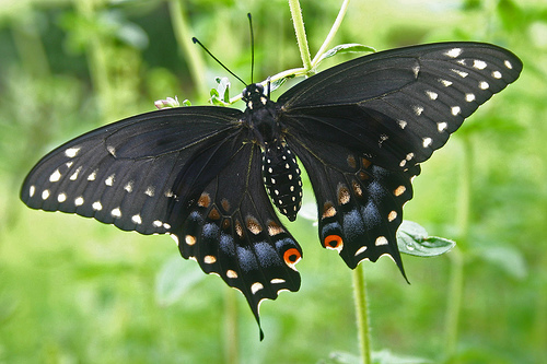 عالم الفراشات 18490410