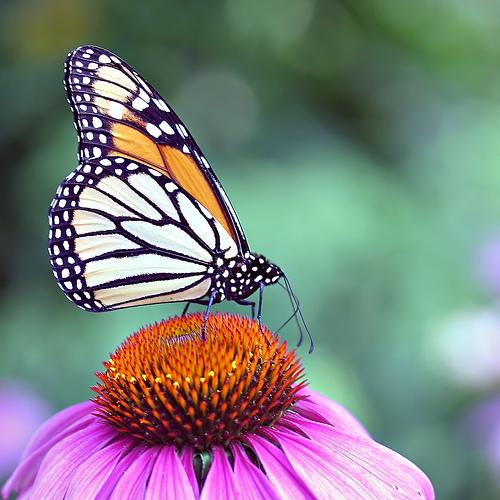 عالم الفراشات 19481110