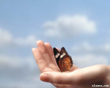 عالم الفراشات 2get10