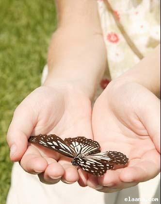 عالم الفراشات Bvn10