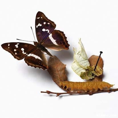 عالم الفراشات Mkl10