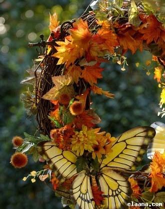 عالم الفراشات Uk10