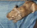 Photos de vos animaux. Scd40011