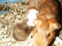 Photos de vos animaux. Scd40014