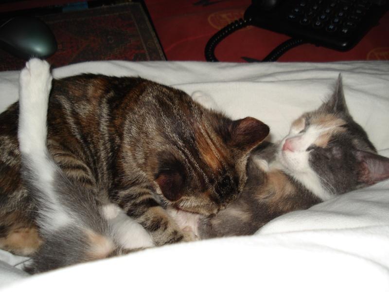 Shu et Miu, des soeurs inséparables Dsc07610