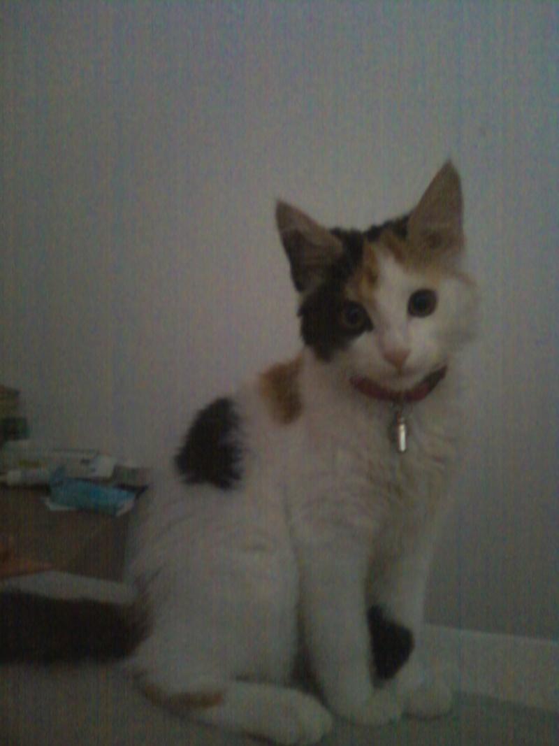 Lola Photo-11