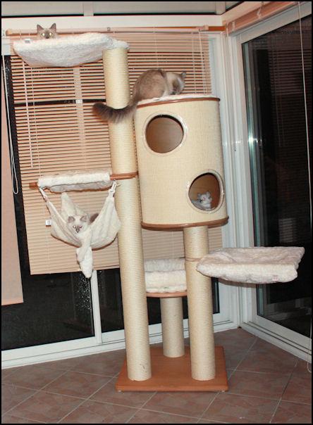 Arbres à chats - Page 21 Arbre_11