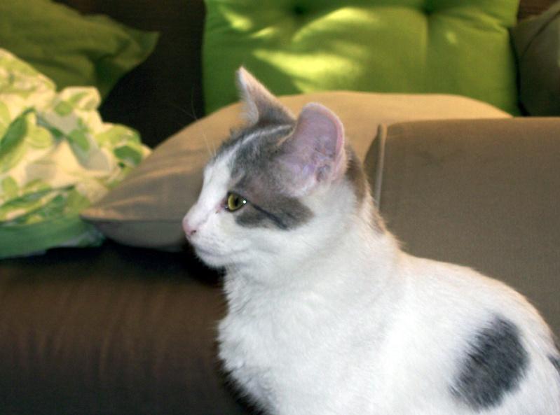 chloé 2 mois blanche et noire Milly_10