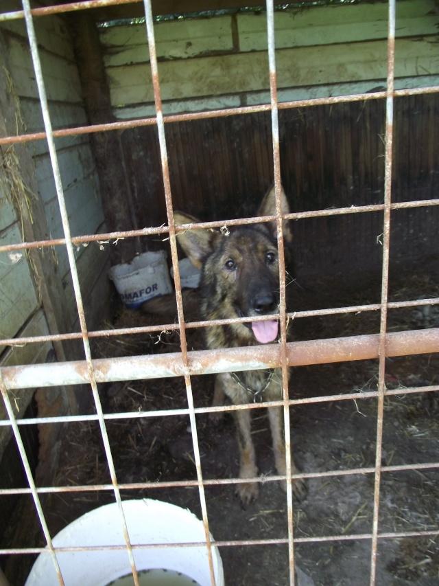 Sujet du message: Chiens à retirer en urgence d'un élevage!!!! (35) Dscf2013