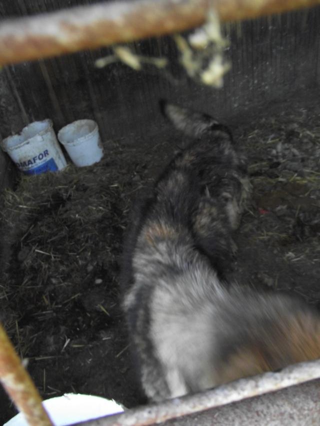 Sujet du message: Chiens à retirer en urgence d'un élevage!!!! (35) Dscf2014