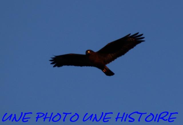 Photos  Img_0023