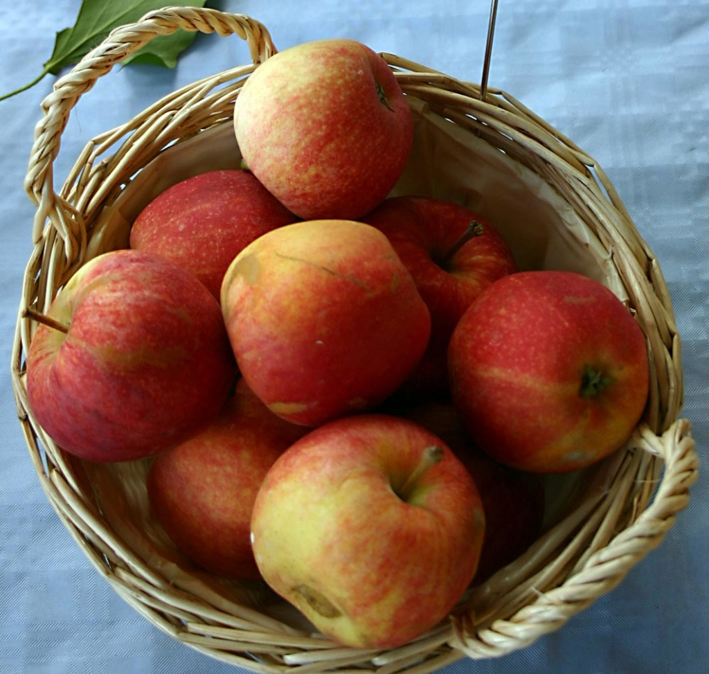 A Saint-Just (34): pomme-pomme-pomme-pomme! Pommes10