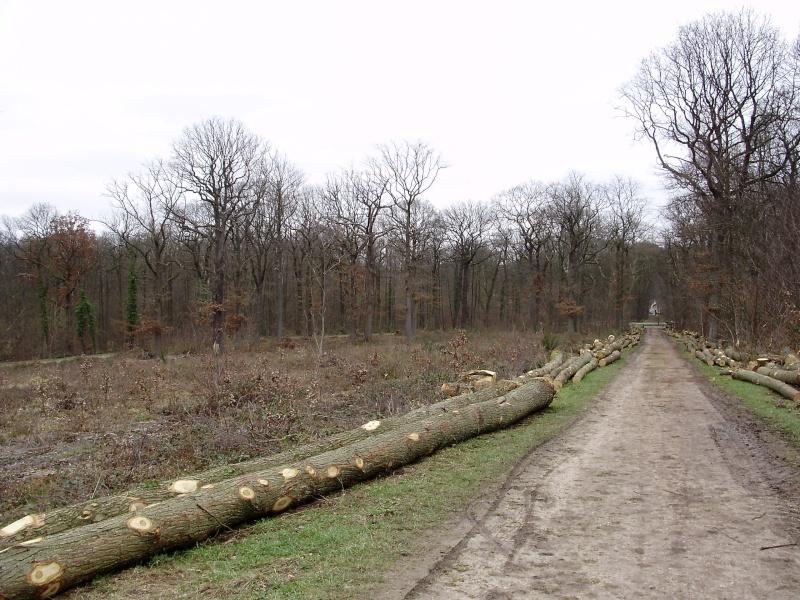 Carabes : destruction massive et durable Ft_de_11