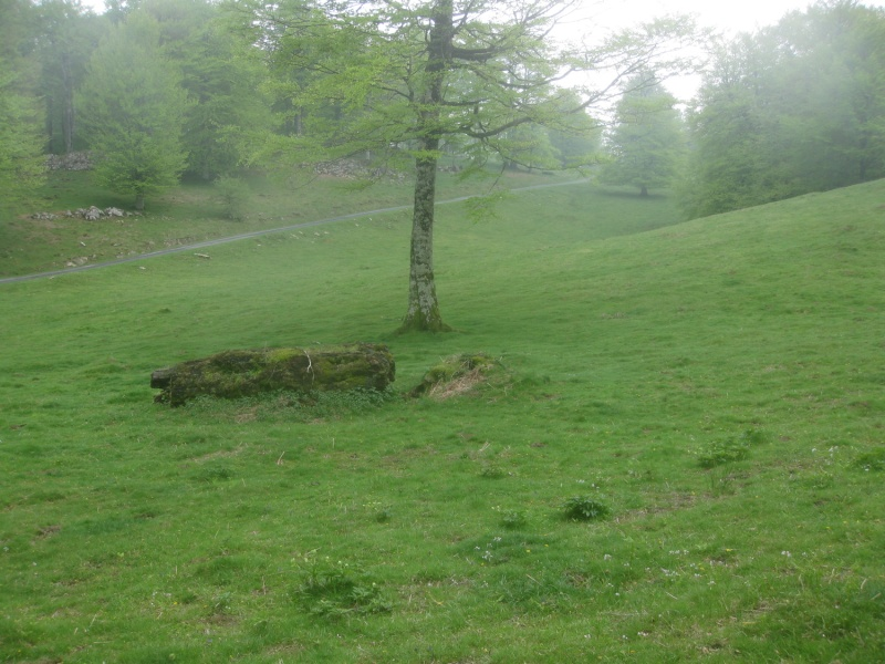 [Rhysodes sulcatus], Pays Basque Img_6910