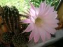 encore une fleur chez moi! Dscn6523