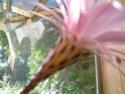 encore une fleur chez moi! Dscn6525