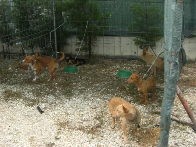 Feira de cães - Clube caçadores Borda do Campo Feira_12