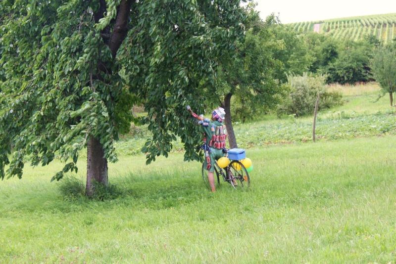 Le Marathon du Vignoble d'Alsace du 18 et 19 juin 2011:et c'est parti pour la 7ème édition qui passera bien entendu par Wangen! 51610