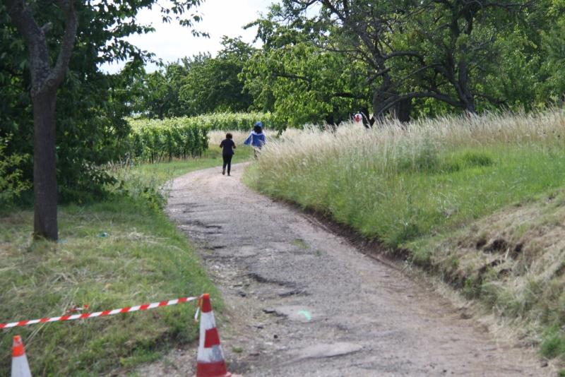 Le Marathon du Vignoble d'Alsace du 18 et 19 juin 2011:et c'est parti pour la 7ème édition qui passera bien entendu par Wangen! 53410