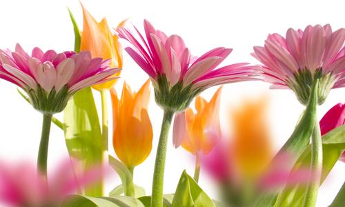 Wangen aux couleurs de Pâques 2011! Fleurs10
