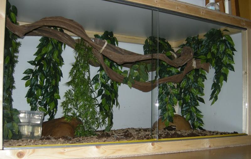 Voilà mes terras arboricoles Snakes38