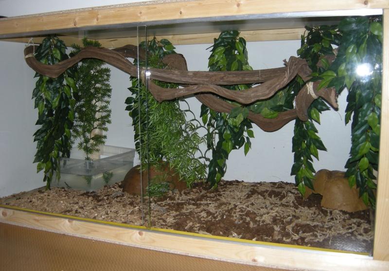 Voilà mes terras arboricoles Snakes39