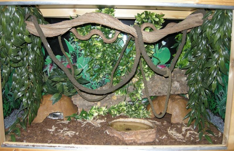 Voilà mes terras arboricoles Snakes40