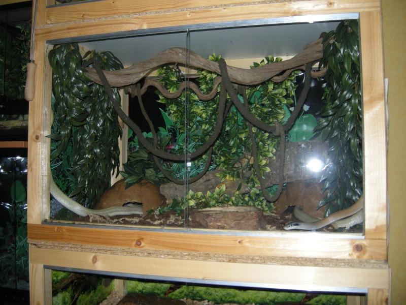 Voilà mes terras arboricoles Snakes41