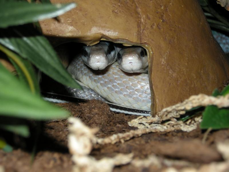 Voilà mes terras arboricoles Snakes42