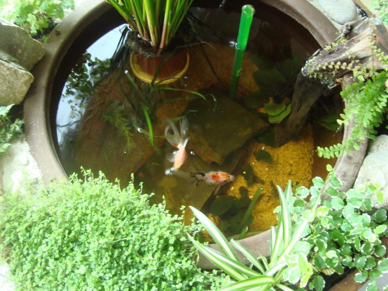 Petit bassin d'interieur bien pratique ! 02610