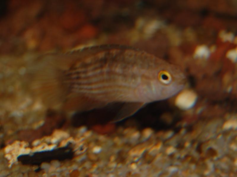 FISHROOM GEO29 Csc_0014