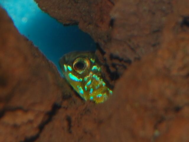 FISHROOM GEO29 Csc_0410