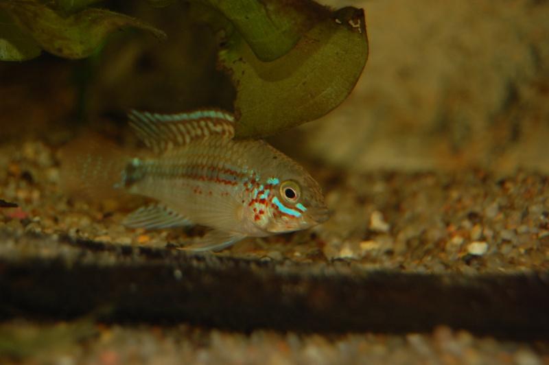 FISHROOM GEO29 Dsc_0010