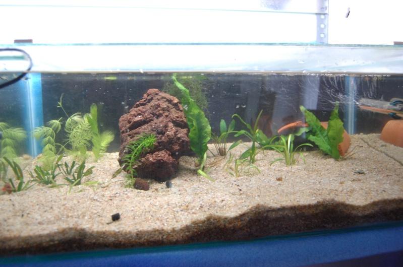 FISHROOM GEO29 Dsc_0125