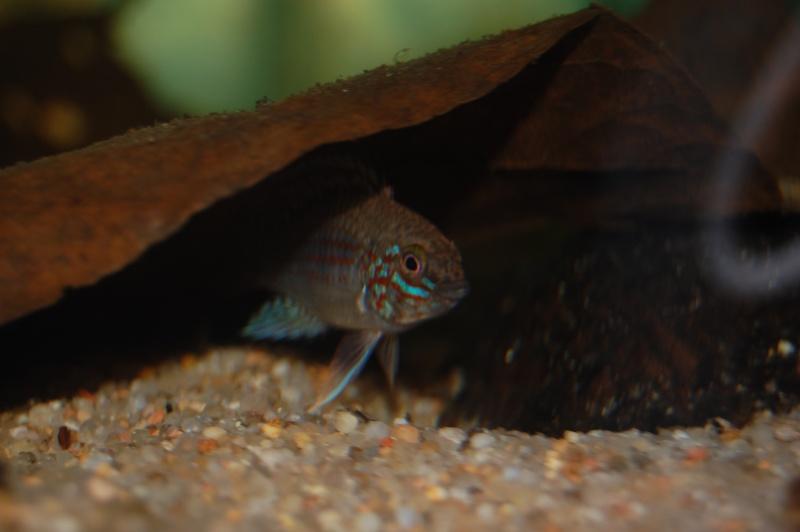 FISHROOM GEO29 Dsc_0416