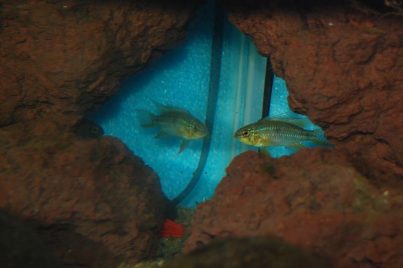 FISHROOM GEO29 Dsc_0513