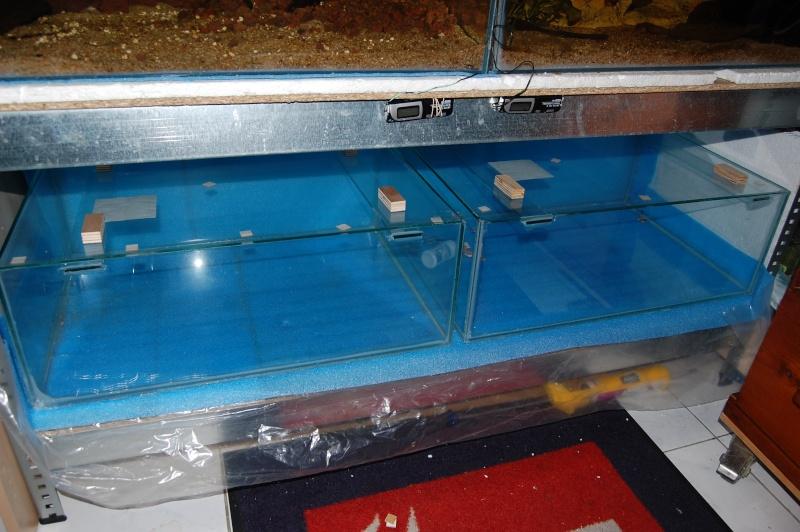FISHROOM GEO29 Dsc_0523