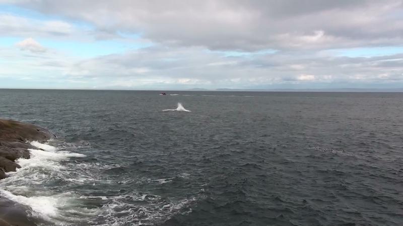Les Baleines 4,5,6 sept 2010, Le  compte rendu Rassem10