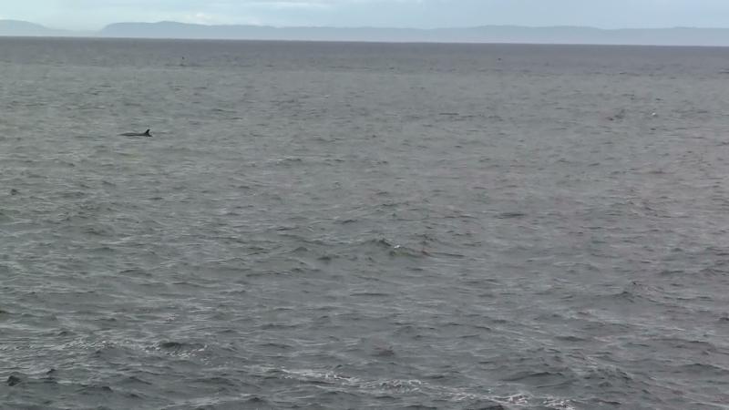 Les Baleines 4,5,6 sept 2010, Le  compte rendu Rassem11
