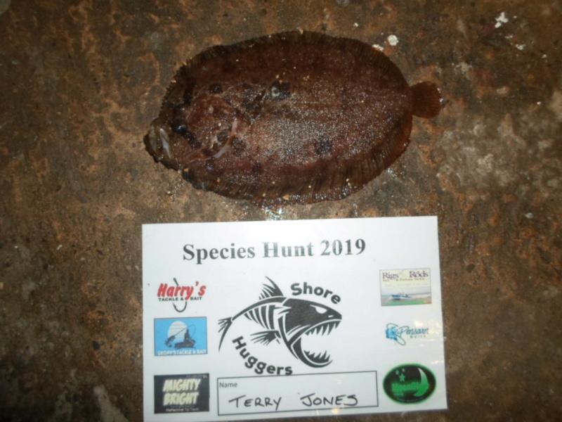 Shore specimens 2019 Sam_0654