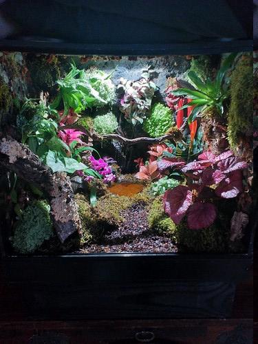 Fabrication de mon terrarium à Dendrobates en PVC expansé  recyclé !! 20190723