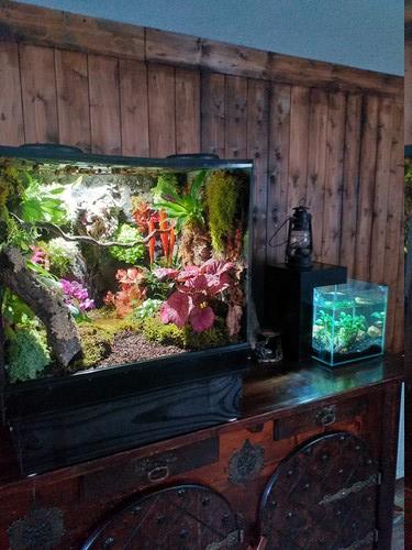 Fabrication de mon terrarium à Dendrobates en PVC expansé  recyclé !! 20190725