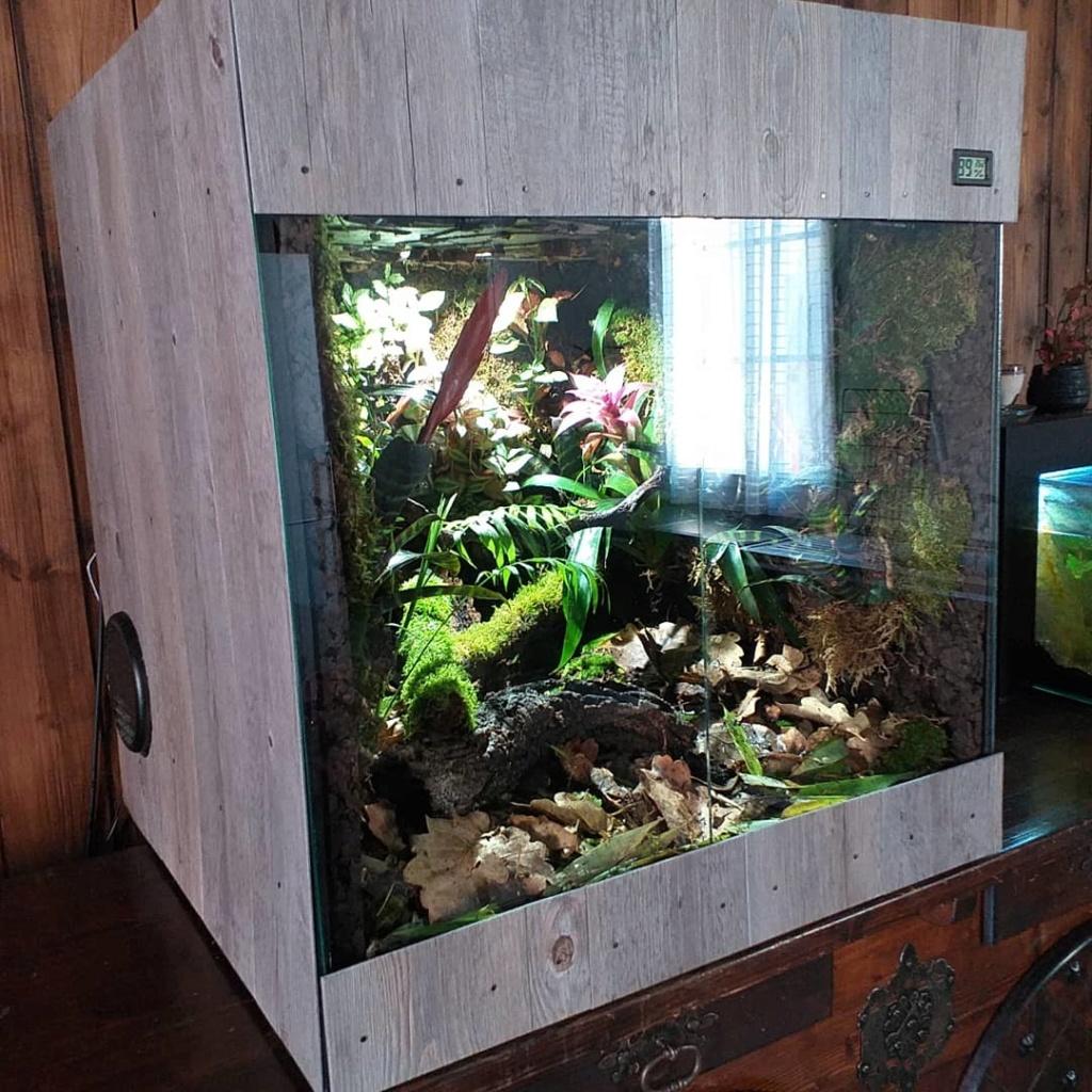 Fabrication de mon terrarium à Dendrobates en PVC expansé  recyclé !! Img_2011