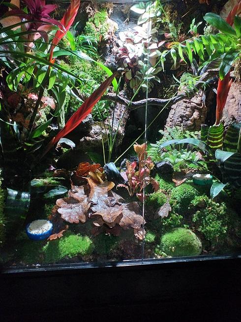 Fabrication de mon terrarium à Dendrobates en PVC expansé  recyclé !! Mon_te10