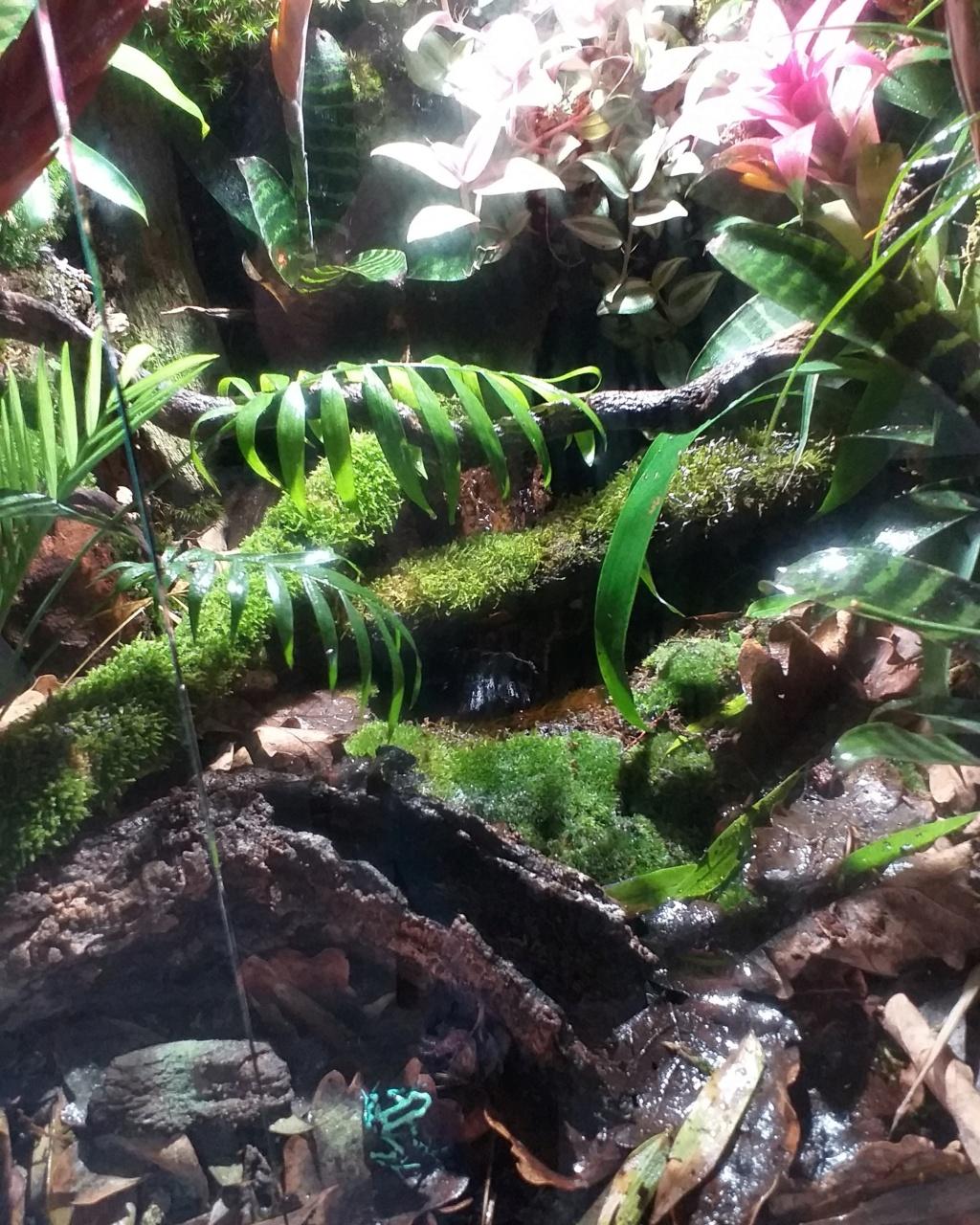 Fabrication de mon terrarium à Dendrobates en PVC expansé  recyclé !! Terrar10