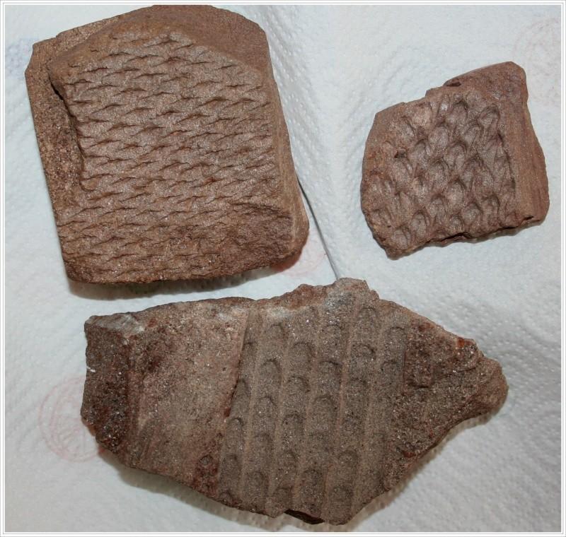 Grès (Sandstone) Schistes( Shale) types de conservation Conser10