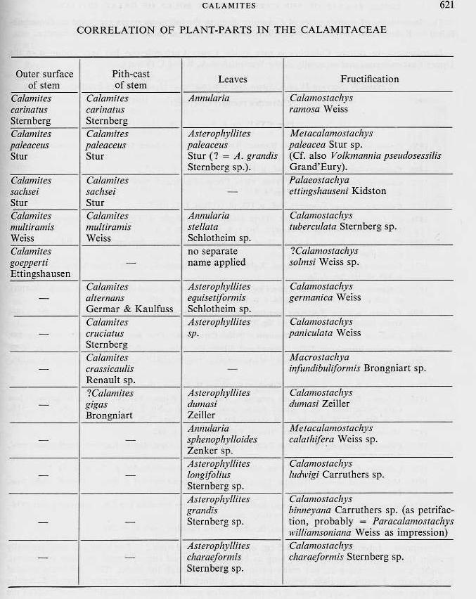 Calamites Schlotheim ,1820.  Annularia sternberg , 1822 .  - Page 2 File2110